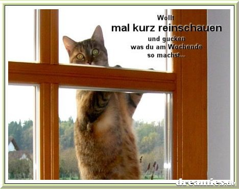 An den Beitrag angehängtes Bild: http://img17.dreamies.de/img/621/b/z8v2jnq3b9f.jpg