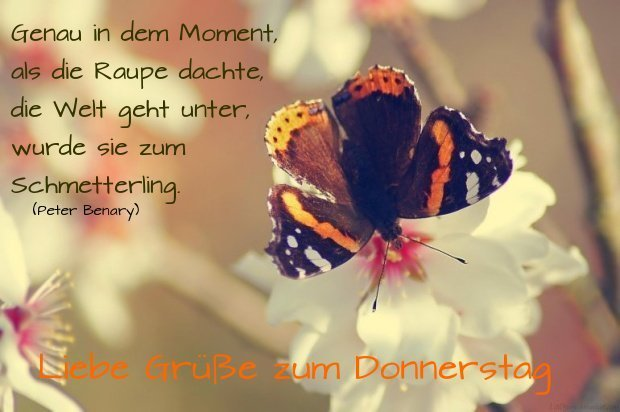 indem moment raupe schmetterling